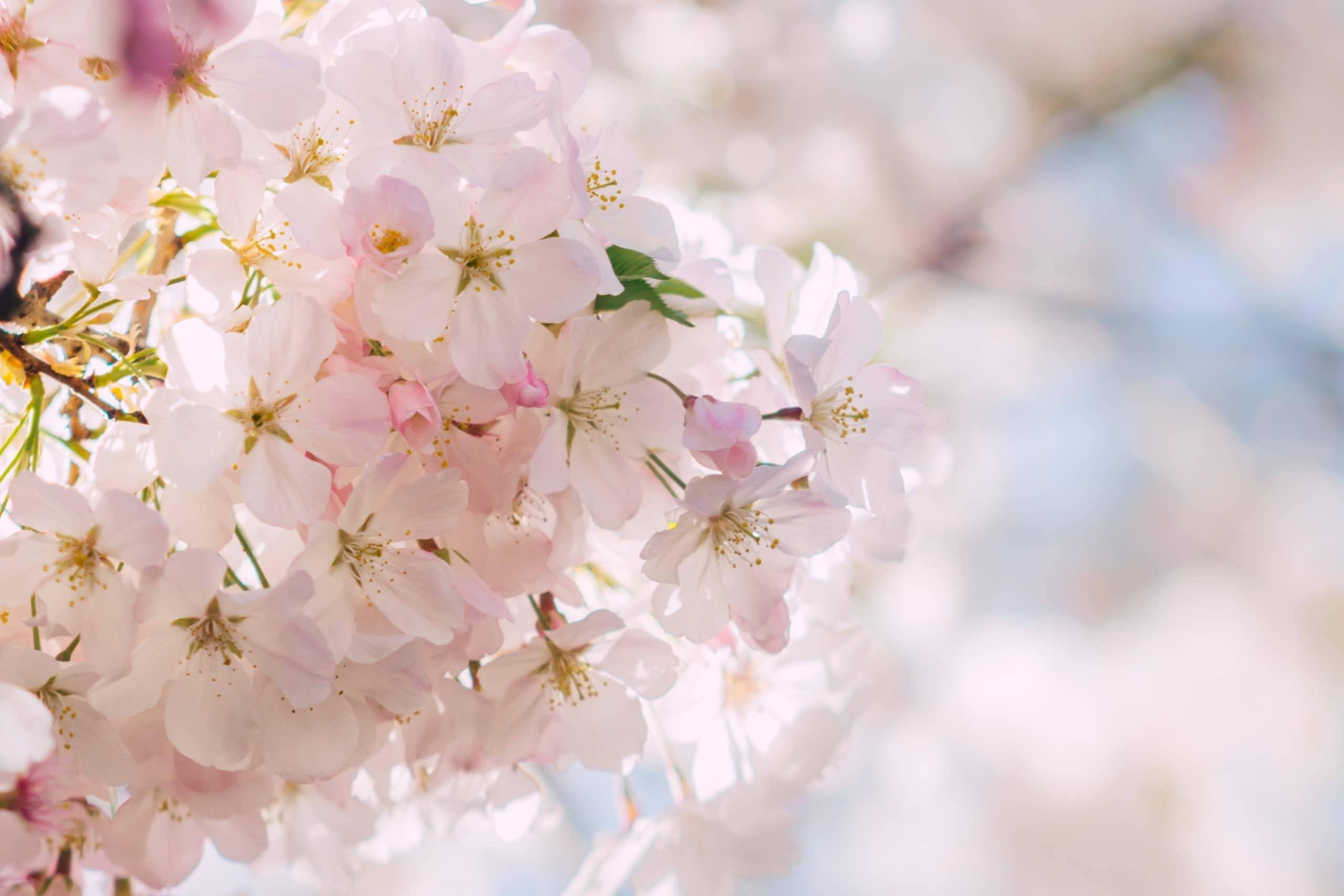 Kirschblüten Hochzeitspapeterie Stuttgart