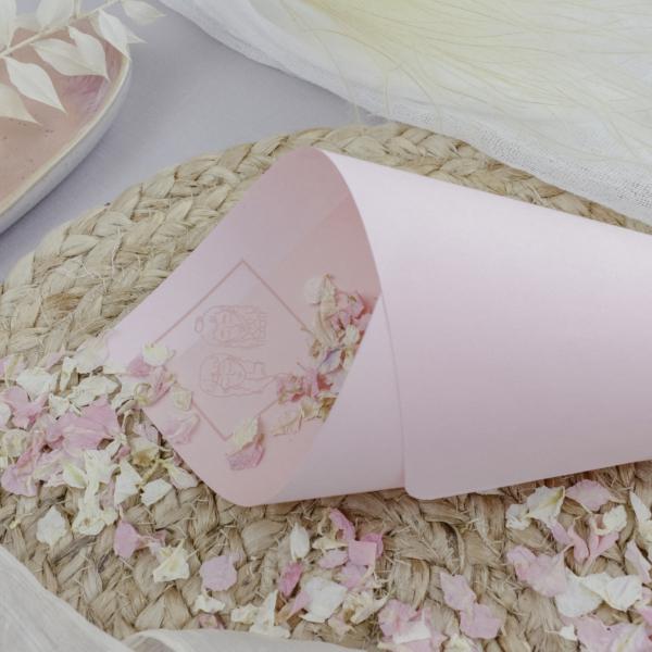 Miss Hanami Illustration Blütenkegel